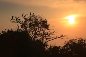 Wood Stork Rookery at Sunset