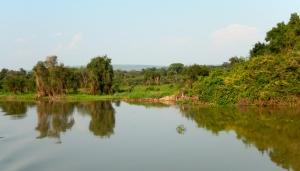 More Gorgeous Pantanal