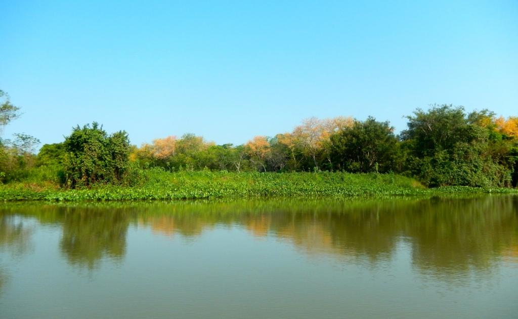 Gorgeous scenery near the jaguar area