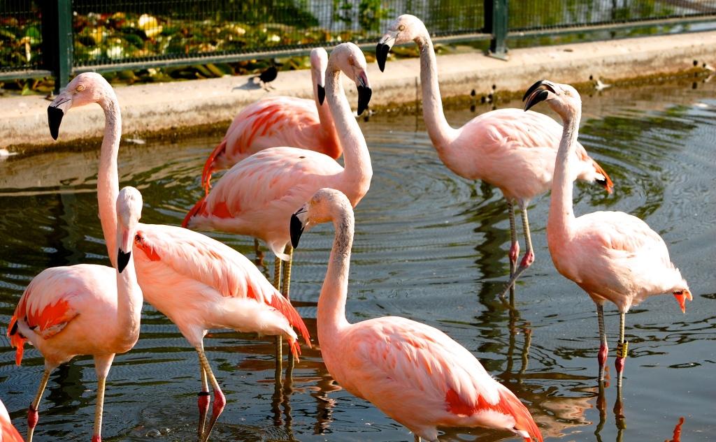 Flamingos in Parque Bicentenario, love that park!
